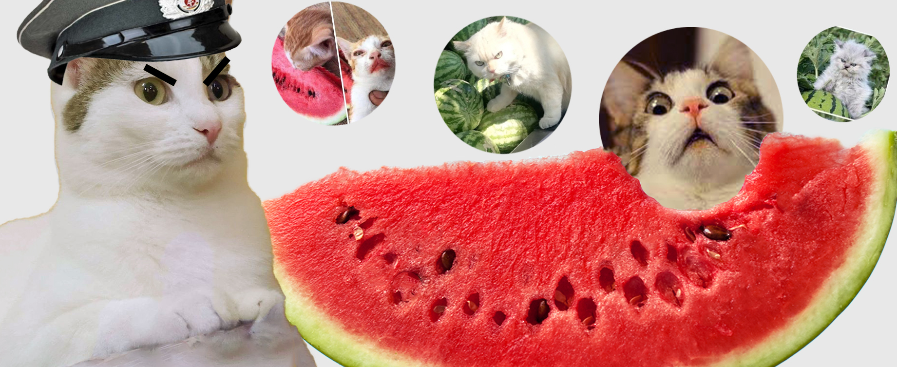 Cats And Watermelons Memes – Cats as Watermelon Masters